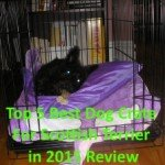 Top 5 Best Dog Crate For Scottish Terrier