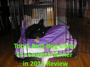 Top 5 Best Dog Crates For Scottish Terrier in 2020 Review