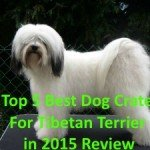 Top 5 Best Dog Crate For Tibetan Terrier