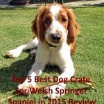 Top 5 Best Dog Crate For Welsh Springer Spaniel
