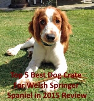 Top 5 Best Dog Crates For Welsh Springer Spaniel in 2020 Review