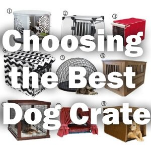 How Big Should a Dog Crate Be for Your Dog
