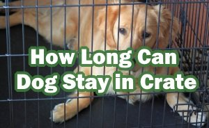 How Long Can Dog Stay in Crate