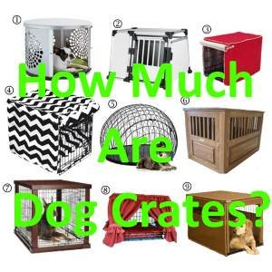 How Much Are Dog Crates?