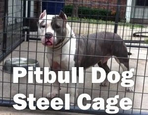 pitbull dog steel cage