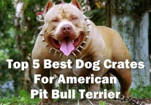 Top 5 Best Wire Dog Crates and Cages For American Pit Bull Terrier in 2018 Review