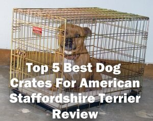 Top 5 Best Dog Crates For American Staffordshire Terrier in 2020 Review