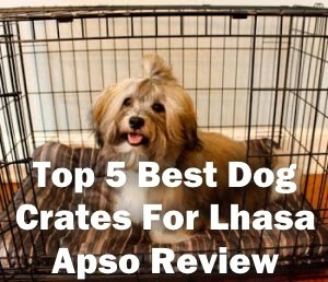 Top 5 Best Dog Crates For Lhasa Apso in 2020 Review