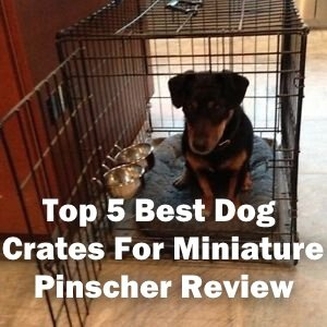 Top 5 Best Dog Crates For Miniature Pinscher in 2020 Review