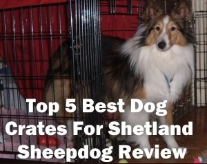 Top 5 Best Dog Crates For Shetland Sheepdog in 2020 Review