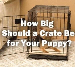 Crate for your puppy