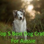 5 Best Dog Crate For Aussie in 2016 Review