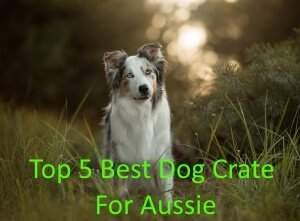 Top 5 Best Dog Crates For Aussie in 2018 Review