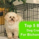 Top 5 Best Dog Crate For Bichon Frise in 2016 Review