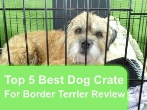Top 5 Best Dog Crates For Border Terrier in 2020 Review