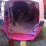 aspen-pet-porter-plastic-kennel