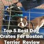 5 Best Dog Crates For Boston Terrier [2021 Reviews]