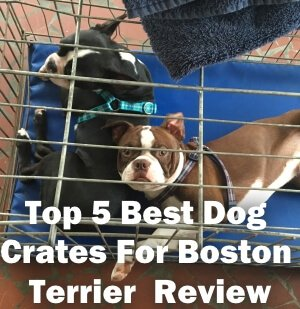 Top 5 Best Dog Crates For Boston Terrier in 2020 Review