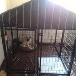 advantek-pet-gazebo-modular-outdoor-dog-kennel