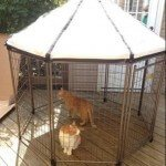 advantek-pet-gazebo-modular-outdoor-dog-kennel_3