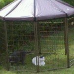 advantek-pet-gazebo-modular-outdoor-dog-kennel_4