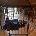 advantek-pet-gazebo-modular-outdoor-dog-kennel_7