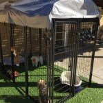 lucky-dog-uptown-welded-wire-dog-kennel-with-free-cover_4