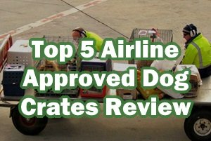 Top 5 Airline Approved Dog Crates 2019 Review