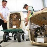 top-5-airline-approved-pet-kennels-review5