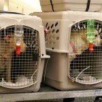 top-5-airline-approved-pet-kennels-review6