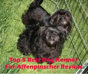 Top 5 Best Dog Kennels For Affenpinscher in 2020 Review