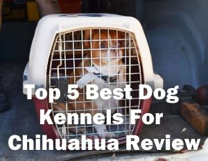 Top 5 Best Dog Kennels For Chihuahua in 2019 Review