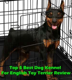Top 5 Best Dog Kennels For English Toy Terrier in 2018 Review