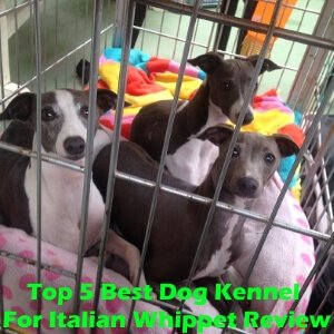 Top 5 Best Dog Kennels For Italian Whippet in 2020 Review
