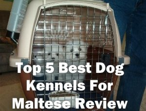 Top 5 Best Dog Kennels For Maltese in 2018 Review