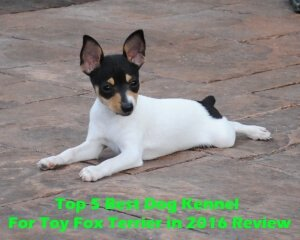 Top 5 Best Dog Kennels For Toy Fox Terrier in 2020 Review