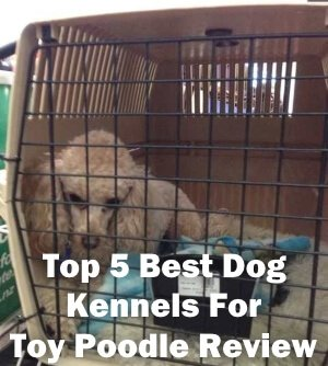 Top 5 Best Dog Kennels For Toy Poodle in 2018 Review