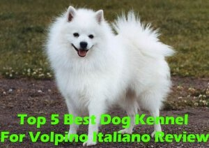 Top 5 Best Dog Kennels For Volpino Italiano in 2020 Review