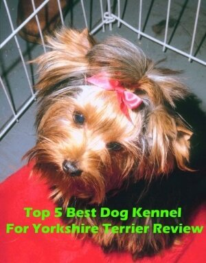 Top 5 Best Dog Kennels For Yorkshire Terrier in 2019 Review