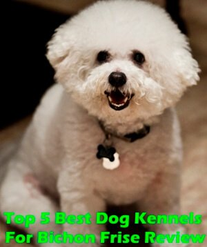 Top 5 Best Dog Kennels For Bichon Frise in 2020 Review