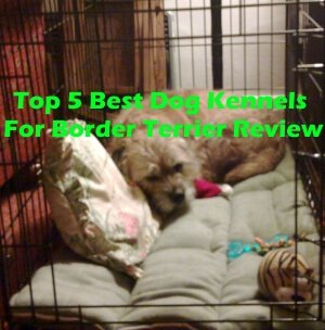 Top 5 Best Dog Kennels For Border Terrier in 2018 Review