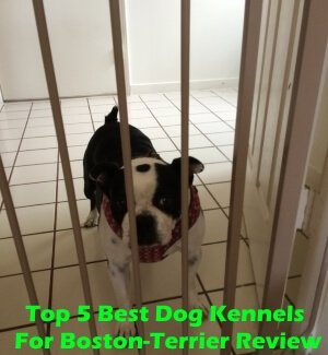 Top 5 Best Dog Kennels For Boston-Terrier in 2018 Review