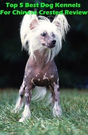 Top 5 Best Dog Kennels For Chinese Crested in 2018 Review