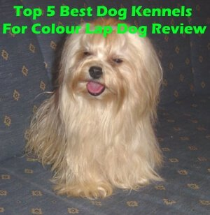 Top 5 Best Dog Kennels For Colour Lap Dog in 2020 Review