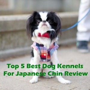 Top 5 Best Dog Kennels For Japanese Chin in 2020 Review