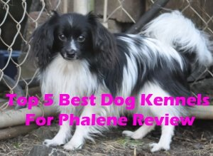 Top 5 Best Dog Kennels For Phalene Review