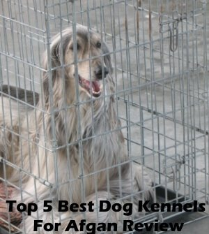 Top 5 Best Dog Kennels and Cages For Afghan in 2020 Review