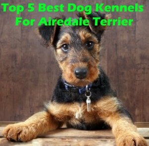 Top 5 Best Dog Kennels For Airedale Terrier in 2020 Review