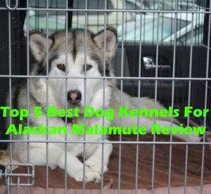 Top 5 Best Dog Kennels and Cages For Alaskan Malamute in 2020 Review