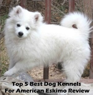 Top 5 Best Dog Kennels For American Eskimo in 2019 Review